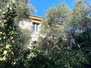 Nice - Quartier Résidentiel Cimiez