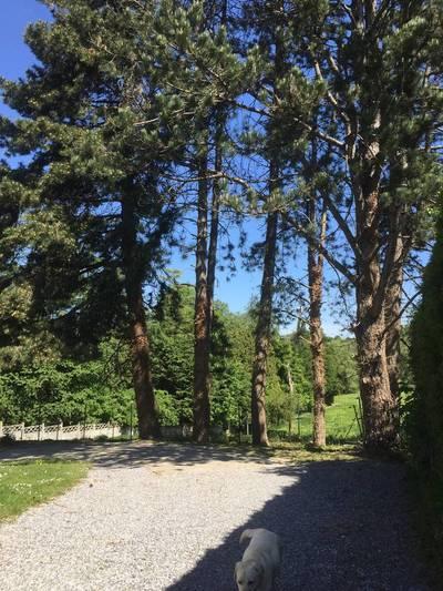 Avesnes-Sur-Helpe (59440)