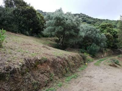 Arbellara (20110)