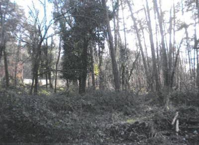 Arbonne-La-Forêt (77630)