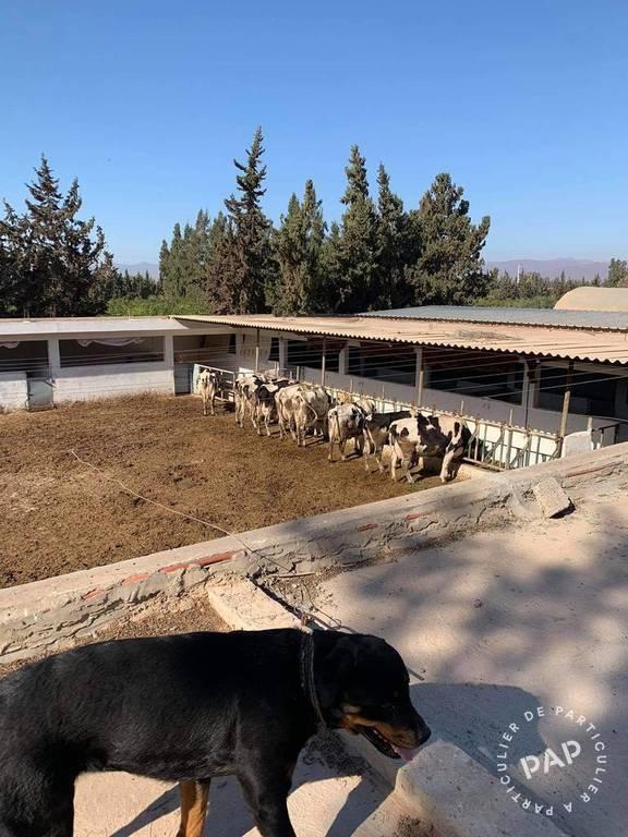 Maison  770m² Maroc